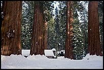 Mariposa Grove Museum at the base of giant trees in winter. Yosemite National Park, California, USA. (color)