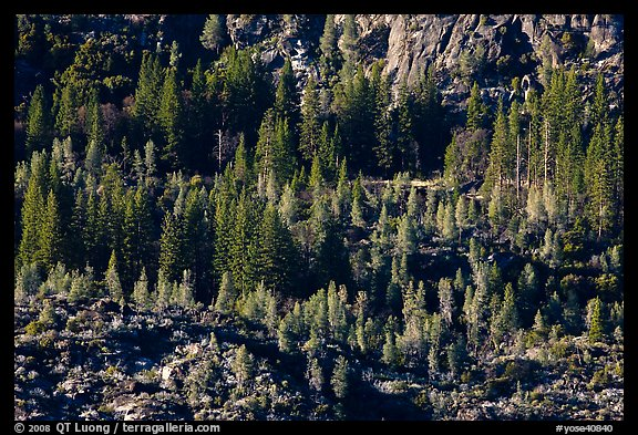 Trees and rocks, Hetch Hetchy Valley. Yosemite National Park (color)