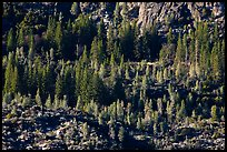Trees and rocks, Hetch Hetchy Valley. Yosemite National Park ( color)