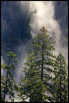 Trees and falling water, Bridalveil falls. Yosemite National Park, California, USA.