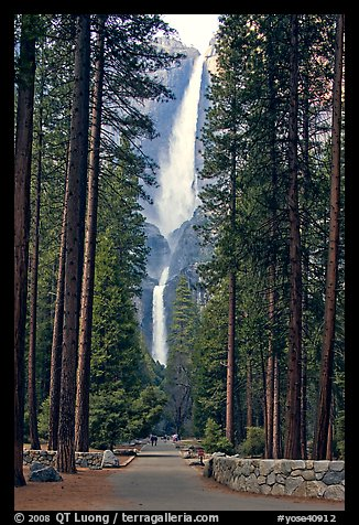 Path leading to Yosemite Falls framed by tall pine trees. Yosemite National Park (color)
