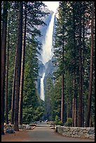 Path leading to Yosemite Falls framed by tall pine trees. Yosemite National Park, California, USA.