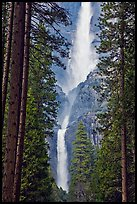 Upper and Lower Yosemite Falls framed by pine trees. Yosemite National Park, California, USA.