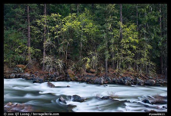 Trees in spring along the Merced River. Yosemite National Park (color)