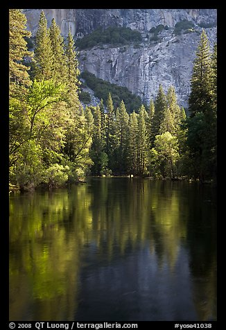 Trees reflected in river at the base of El Capitan in spring. Yosemite National Park (color)