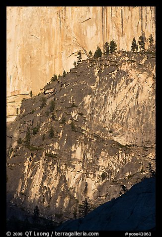 Pine trees on ridges and Half-Dome face. Yosemite National Park (color)