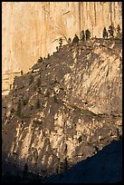 Pine trees on ridges and Half-Dome face. Yosemite National Park ( color)
