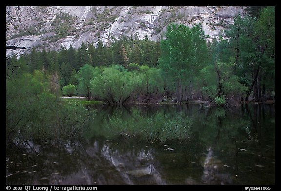 Willows, cliffs, and reflections, Mirror Lake. Yosemite National Park (color)