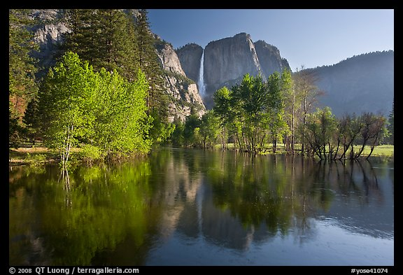Trees in spring foliage and Yosemite Falls reflected in Merced River. Yosemite National Park (color)