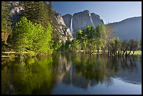 Trees in spring foliage and Yosemite Falls reflected in Merced River. Yosemite National Park ( color)