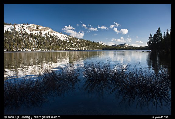 Willows and snowy peaks reflected in Tenaya Lake. Yosemite National Park (color)
