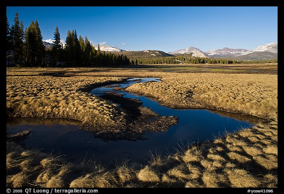 Meandering stream and grasses, early spring, Tuolumne Meadows. Yosemite National Park (color)