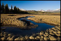 Meandering stream and grasses, early spring, Tuolumne Meadows. Yosemite National Park, California, USA.