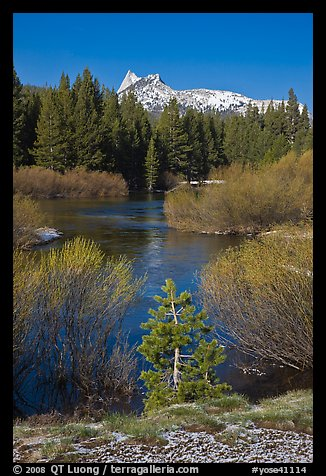 Willows, fresh snow,  and Cathedral Peak. Yosemite National Park (color)