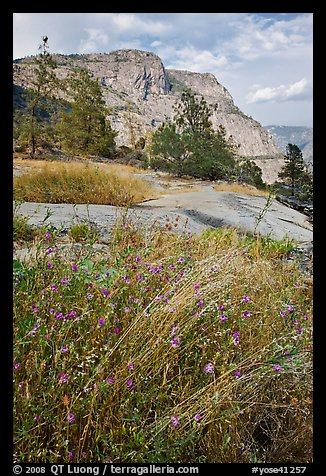 Flowers, grasses, and Hetch Hetchy Dome. Yosemite National Park (color)