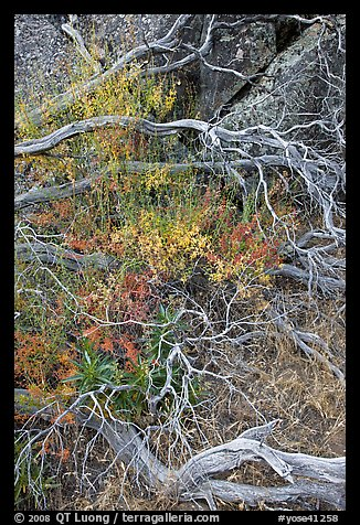 Dead branches, brush, and rock, Hetch Hetchy. Yosemite National Park (color)