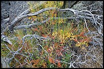 Dead branches, shrubs, and rocks, Hetch Hetchy. Yosemite National Park, California, USA.