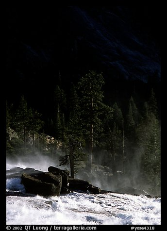 Tree in swirling waters and forest in shade, Waterwheel Falls. Yosemite National Park (color)
