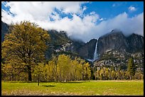 Meadow, trees, and Yosemite Falls in spring. Yosemite National Park ( color)