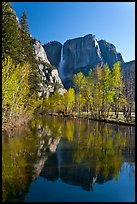 Yosemite Falls reflected in mirror-like Merced River, early spring. Yosemite National Park ( color)