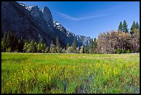 Wildflowers in flooded Cook Meadow,. Yosemite National Park, California, USA. (color)