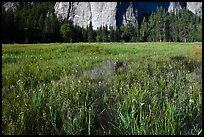 Irises, flooded El Capitan Meadow, and Cathedral Rocks. Yosemite National Park ( color)