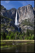 Man paddling in flooded meadow below Yosemite Falls. Yosemite National Park ( color)