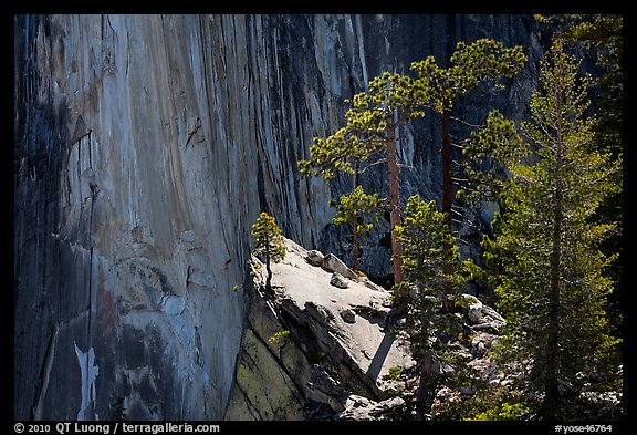 Pine trees and Half-Dome face. Yosemite National Park (color)