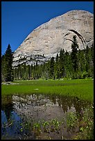 Half-Dome reflected in Lost Lake. Yosemite National Park, California, USA. (color)