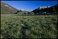 Meadow in Lyell Canyon, late afternoon. Yosemite National Park ( color)