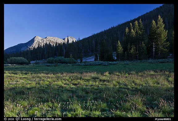 Meadow and Potter Point, Lyell Canyon. Yosemite National Park (color)