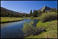 Tuolumne River in Lyell Canyon, morning. Yosemite National Park ( color)