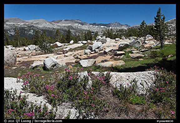 Alpine flowers and high Sierra range from pass. Yosemite National Park (color)