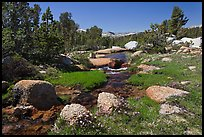 Stream and alpine meadow. Yosemite National Park ( color)