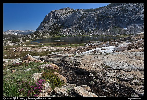 Alpine scenery with flowers, stream, lake, and mountains, Vogelsang. Yosemite National Park (color)