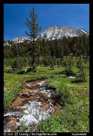 Stream and lush meadow, Lewis Creek. Yosemite National Park (color)