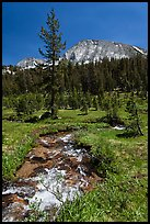Stream and lush meadow, Lewis Creek. Yosemite National Park, California, USA. (color)
