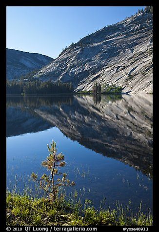 Pine sappling and granite domes reflected, Merced Lake. Yosemite National Park (color)