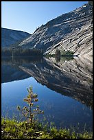 Pine sappling and granite domes reflected, Merced Lake. Yosemite National Park ( color)