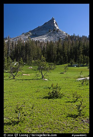 Meadow and Tressider Peak. Yosemite National Park (color)