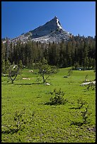 Meadow and Tressider Peak. Yosemite National Park ( color)