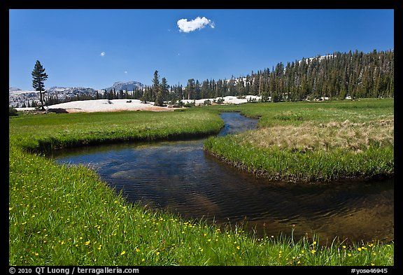 Wildflowers and stream in alpine meadow near Lower Cathedral Lake. Yosemite National Park (color)