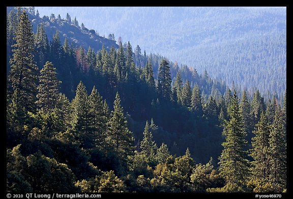Forested slopes, Wawona. Yosemite National Park (color)