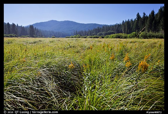 Wavona meadow in summer, morning. Yosemite National Park (color)