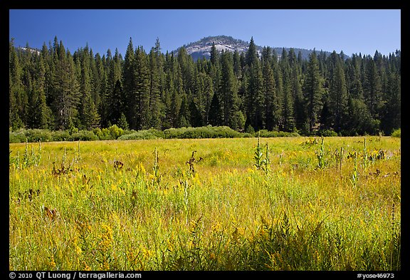 Wawona Dome viewed from Wawona meadow. Yosemite National Park (color)