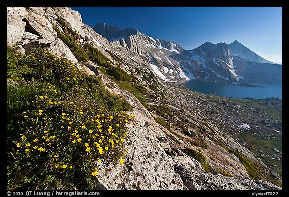 Wildflowers on slope, Upper McCabe Lake and Sheep Peak. Yosemite National Park (color)