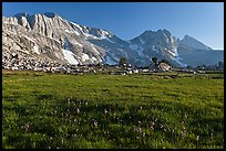 Meadow with summer flowers, North Peak crest. Yosemite National Park, California, USA. (color)