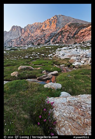 Wildflowers, meadow, and Shepherd Crest East at sunset. Yosemite National Park (color)