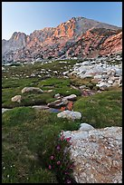 Wildflowers, meadow, and Shepherd Crest East at sunset. Yosemite National Park, California, USA. (color)