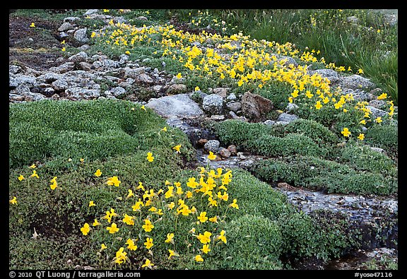 Alpine flowers and stream. Yosemite National Park (color)